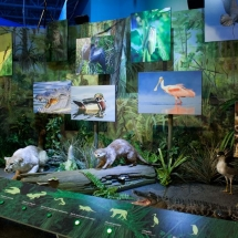 Interactive Everglades Exhibit for the South Florida Science Center & Aquarium
