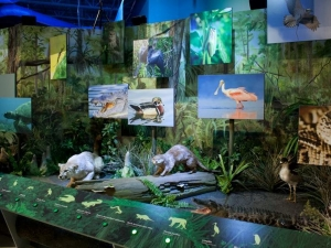 Interactive Exhibit which showcases the animals of the Everglades